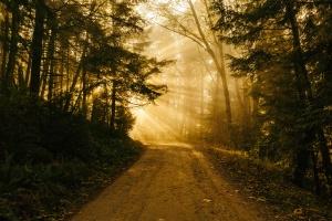 dawn breaking path